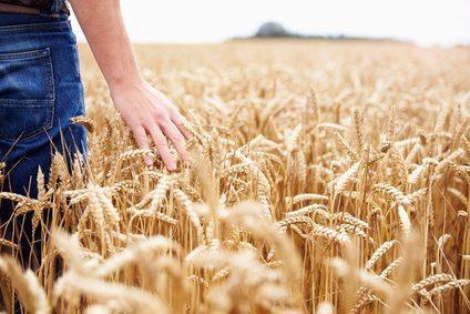 Wypadek rolnika w jego gospodarstwie – kto wypłaci odszkodowanie?