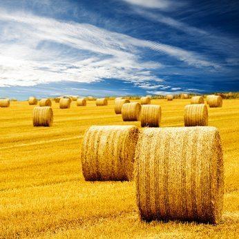 Ubezpieczenie w KRUS-ie – świadczenia z tytułu wypadku rolniczego