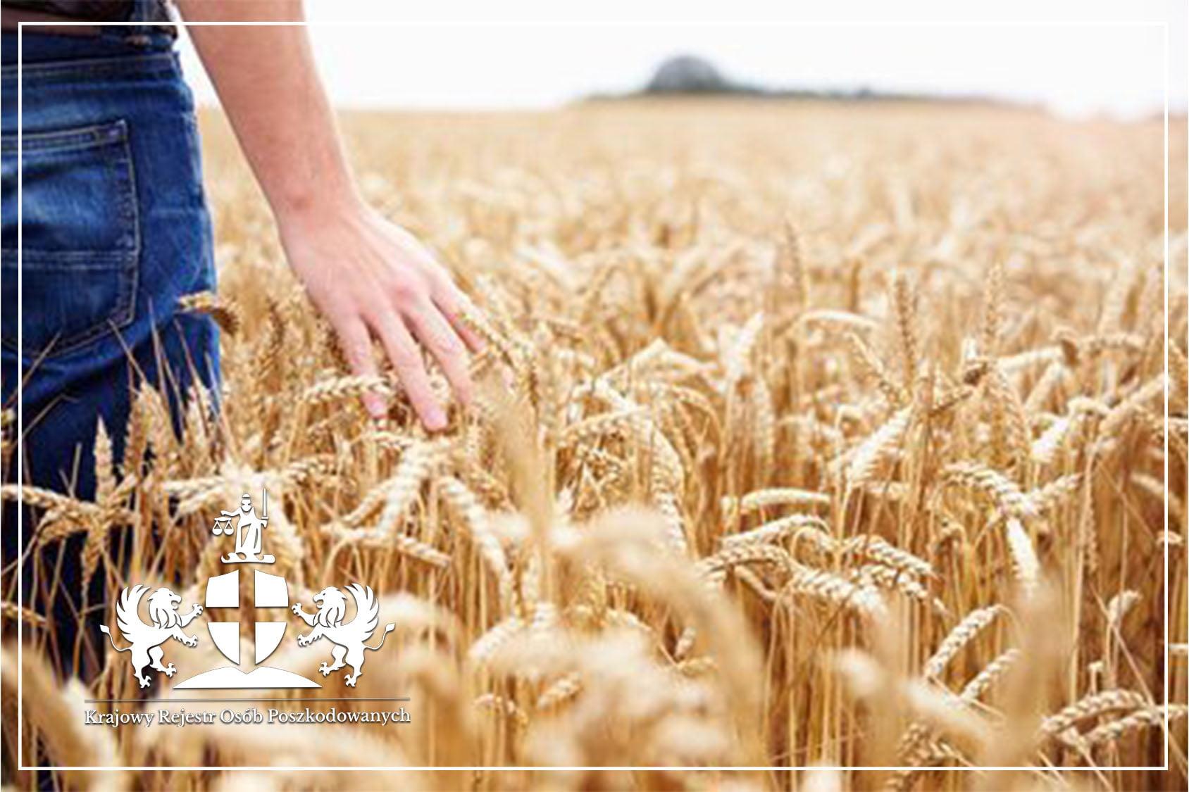 Wypadek rolnika w jego gospodarstwie – kto wypłaci odszkodowanie